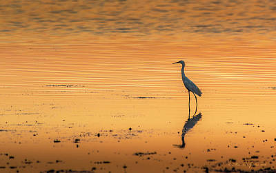 Heron Photograph - Time To Reflect by Marvin Spates