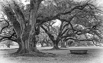 Tree Photograph - Time Travel - Vignette by Steve Harrington