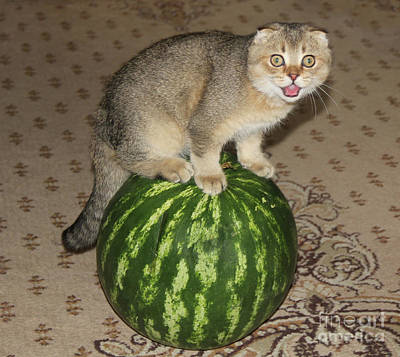 Photograph - Timothy On The Watermelon by Sergey Lukashin