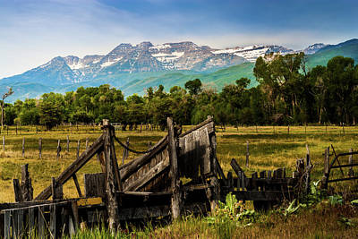 Photograph - Timpanogos And Loading Shoot by TL Mair