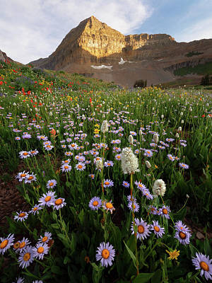 Photograph - Timpanogos Wildflowers by Dustin LeFevre
