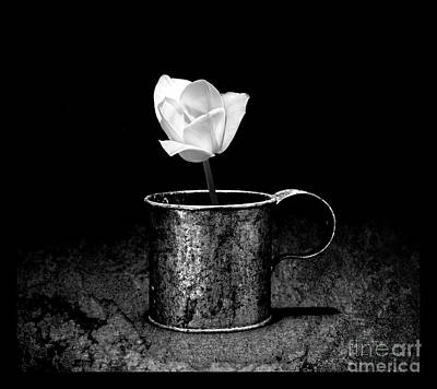 Photograph - Tin Cup Tulip Black And White by John Stephens
