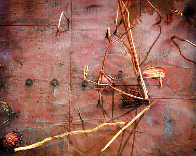 Photograph - Tin Door - Red Pond by Wayne Sherriff