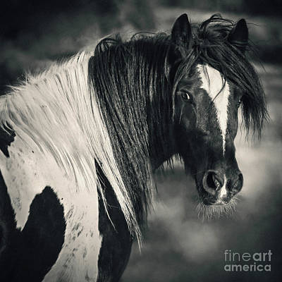 Photograph - Tinker Horse Portrait by Dimitar Hristov