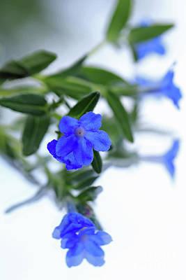 Photograph - Tiny And Blue I by Mary Haber