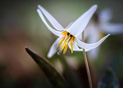 Photograph - Tiny Beauty by Joni Eskridge