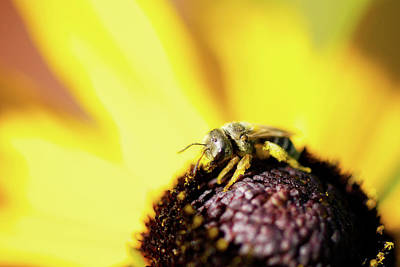 Photograph - Tiny Bee by Lisa Knechtel