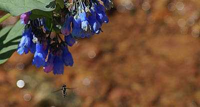 Photograph - Tiny Bee by Thomas Bomstad