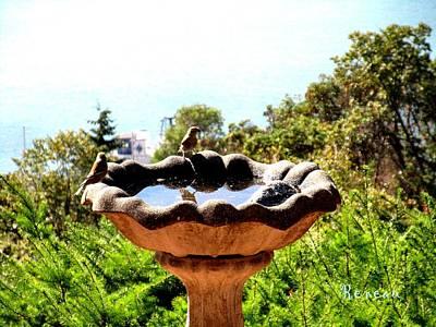Photograph - Tiny Birds Bathing by Sadie Reneau