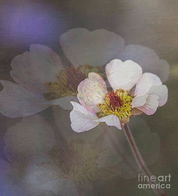 Photograph - Tiny Blossom by Cathy Donohoue