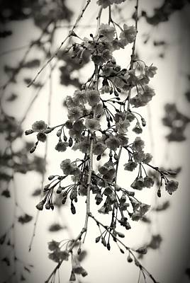 Tiny Buds And Blooms Art Print by Angie Tirado