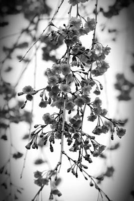 Tiny Buds And Blooms Art Print
