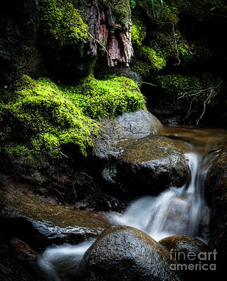 Photograph - Tiny Cascade by The Forests Edge Photography - Diane Sandoval