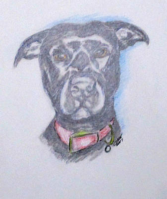 Drawing - Tiny by Clyde J Kell