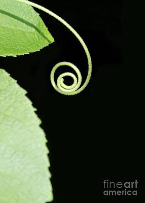 Photograph - Tiny Curl by Sabrina L Ryan