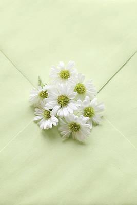 Photograph - Tiny Daisies On Green Envelope by Di Kerpan