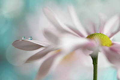 Floral Photograph - Tiny Duo by Heidi Westum