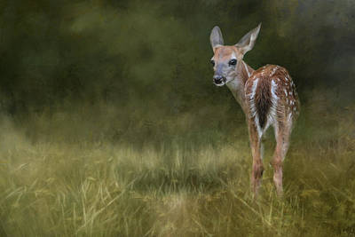 Photograph - Tiny Fawn In The Meadow Deer Art By Jai Johnson by Jai Johnson