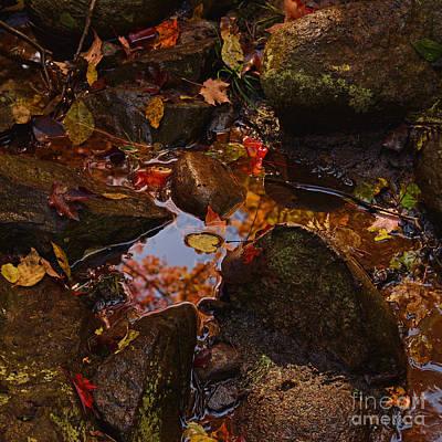 Photograph - Tiny Glimpse by Joshua McCullough