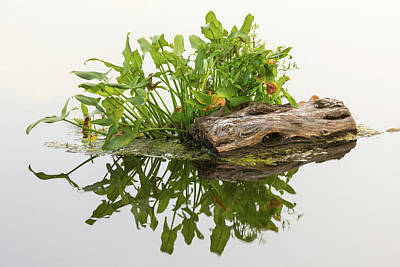 Photograph - Tiny Island by Sara Hudock