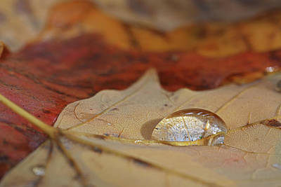 Photograph - Tiny Lanscape by Juergen Roth