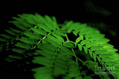 Photograph - Tiny Leaves by Michelle Meenawong