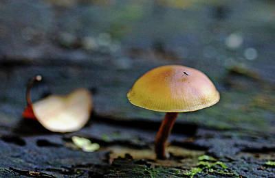 Photograph - Tiny Mushroom by Debbie Oppermann