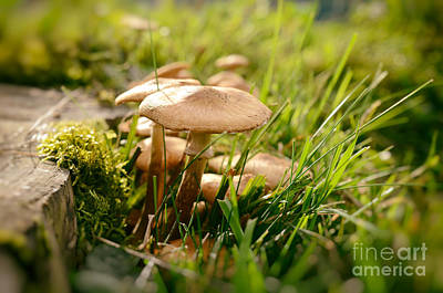 Photograph - Tiny Mushrooms In Autumn by Sabine Jacobs