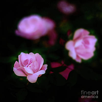 Photograph - Tiny Pink Azaleas by Tamyra Ayles