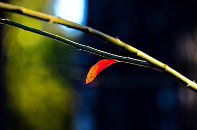 Photograph - Tiny Red Leaf by Linda Brown