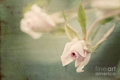 Photograph - Tiny Roses by Linda Lees
