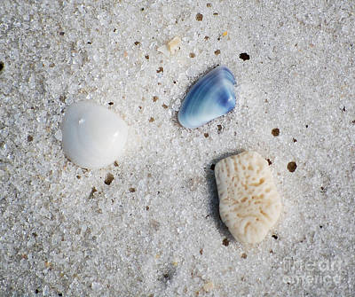 Photograph - Tiny Sea Shells And A Piece Of Coral In Fine Wet Sand Macro by Shawn O'Brien