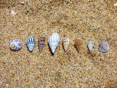 Tiny Seashells On The Sand Art Print