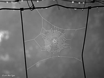 Photograph - Tiny Shimmering Spiderweb by Matt Taylor