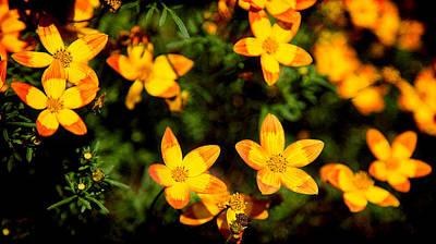 Photograph - Tiny Suns by Milena Ilieva