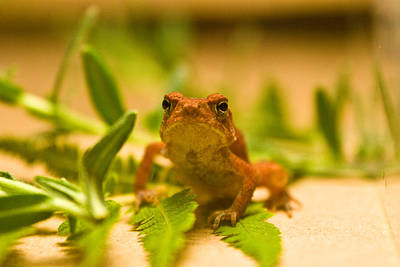 Wilderness Camping - Tiny Toad Frog by Douglas Barnett