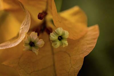 Photograph - Tiny Tree Flowers by Jay Stockhaus