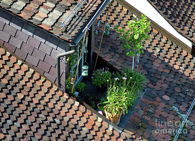 Photograph - Tiny Urban Garden by Michelle Meenawong