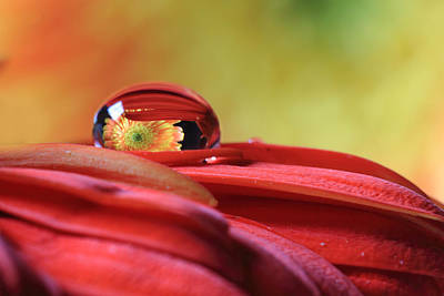 Photograph - Tiny Water Drop Reflections by Angela Murdock
