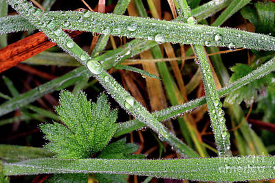 Photograph - Tiny Water Droplets On Grass by Terry Elniski
