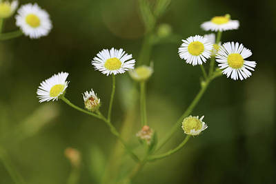 Photograph - Tiny Wildflowers 070818 by Mary Bedy