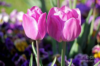Photograph - Tip Toe Through The Tulips by John S