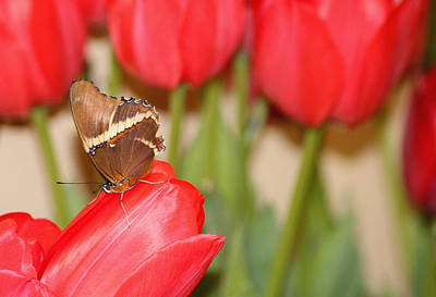 Photograph - Tip Toe Through The Tulips by Living Color Photography Lorraine Lynch