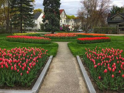 Photograph - Tip Toe Through The Tulips With Me  by Patricia E Sundik