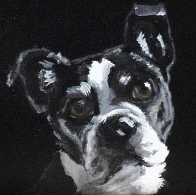 Dog Close-up Painting - Tippy by Carol Russell