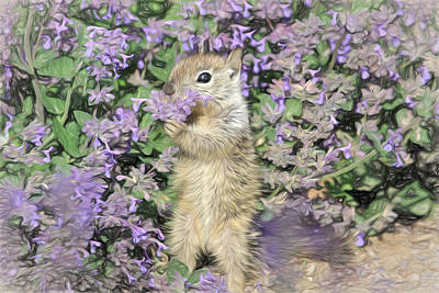 Squirrel Photograph - Tippy Toe Snack by Donna Kennedy