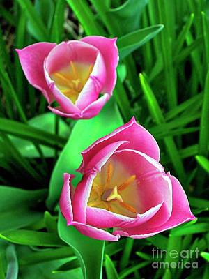 Photograph - Tiptoe Through The Tulips by Jenness Asby