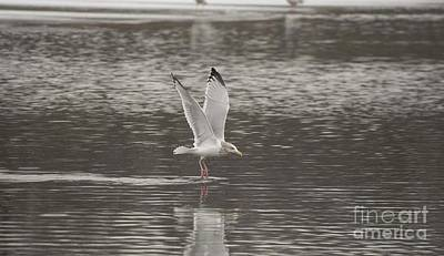 Photograph - Tiptoeing Across The Water by David Bearden