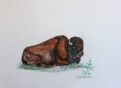 Drawing - Tired Bison by Ellen Canfield