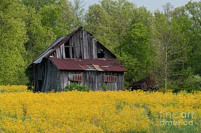 Photograph - Tired Indiana Barn - D010095 by Daniel Dempster